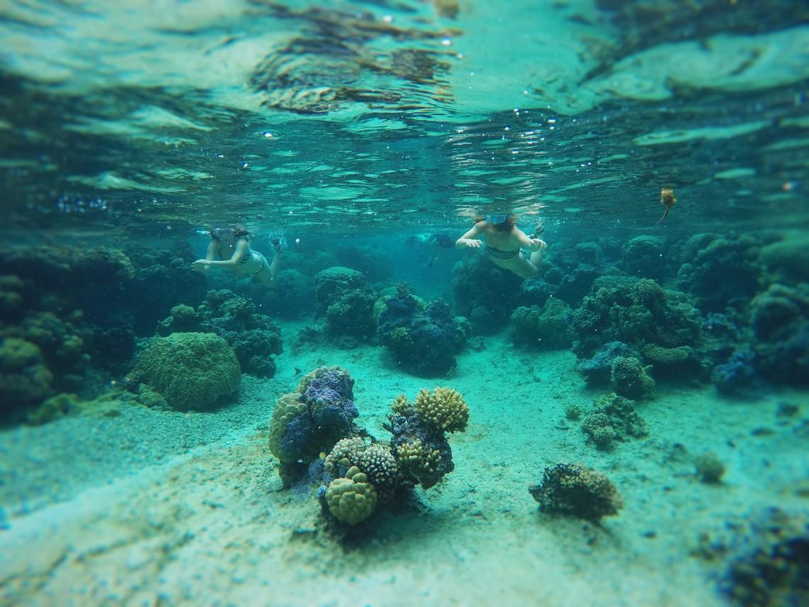 https://tahititourisme.mx/wp-content/uploads/2017/08/Bora-Bora-Reef-Discovery-2.jpg