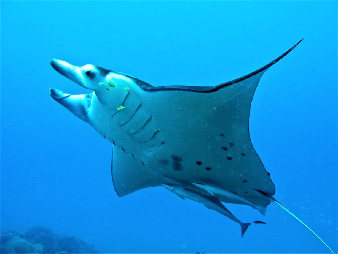 https://tahititourisme.mx/wp-content/uploads/2017/08/Bora-Bora-Reef-Discovery-3.jpg