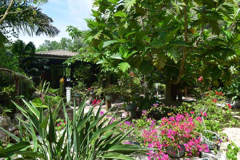 https://tahititourisme.mx/wp-content/uploads/2017/08/Jardin-botanique-2020.jpg