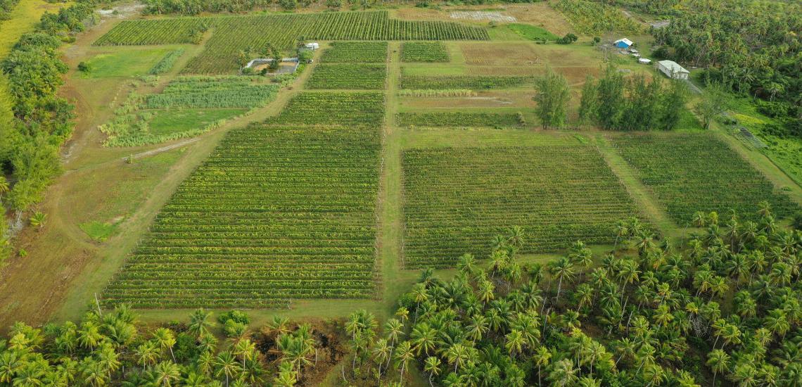 https://tahititourisme.mx/wp-content/uploads/2017/08/Vin-de-Tahiti_1140x550-min.png