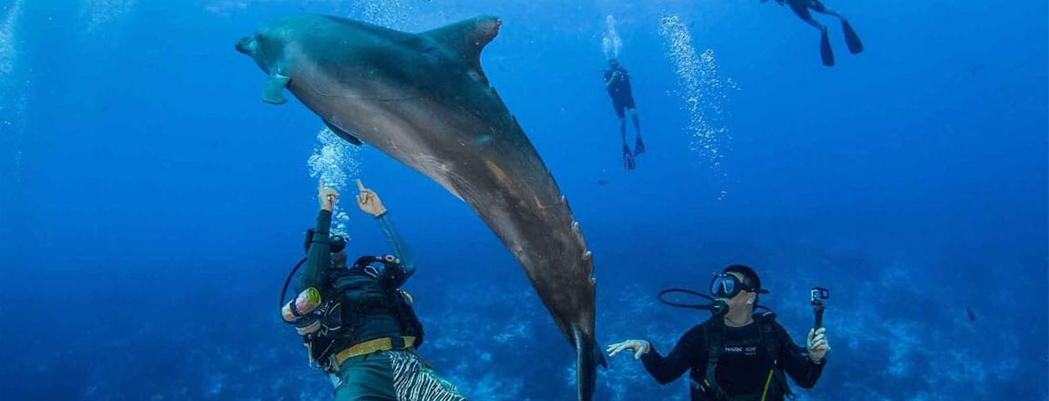 https://tahititourisme.mx/wp-content/uploads/2017/10/Rangiroa-Diving-Center-1150x440px.jpg