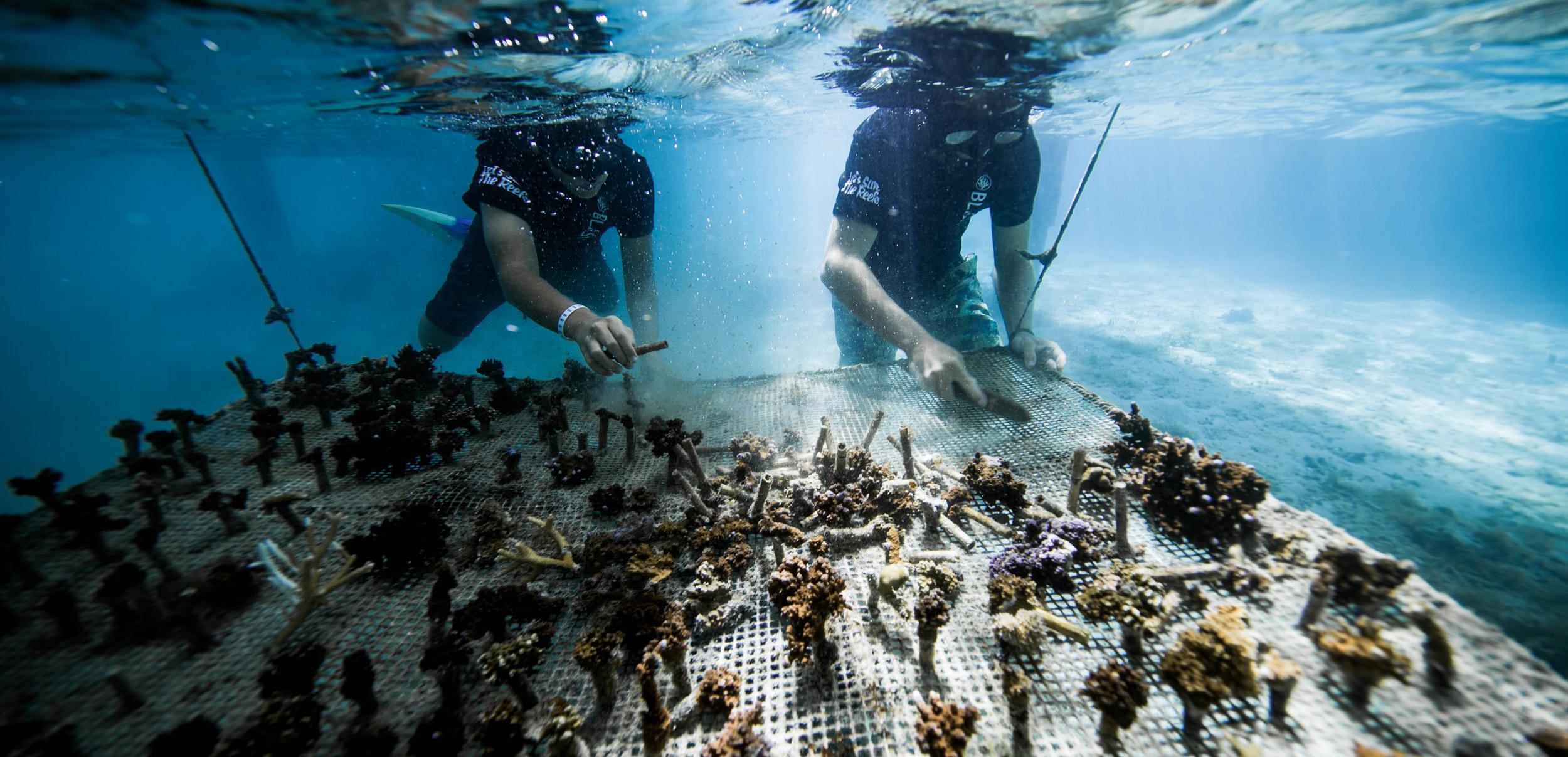 https://tahititourisme.mx/wp-content/uploads/2018/11/CoralGardeners-couv.jpg