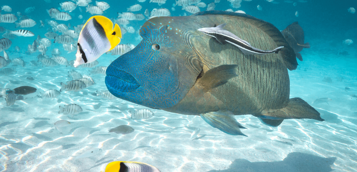 https://tahititourisme.mx/wp-content/uploads/2020/02/SnorkelingExpeditions2_1140x550-min.png