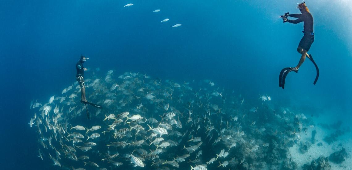 https://tahititourisme.mx/wp-content/uploads/2020/02/SnorkelingExpeditions_1140x550.png