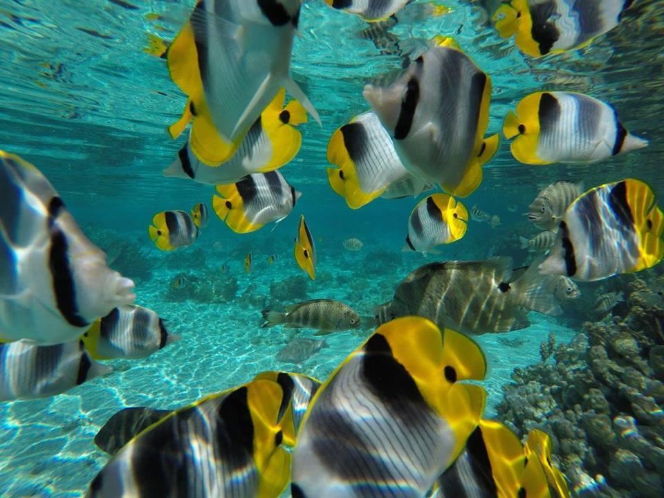 https://tahititourisme.mx/wp-content/uploads/2020/06/jardin-corail-tahaa-5.jpg