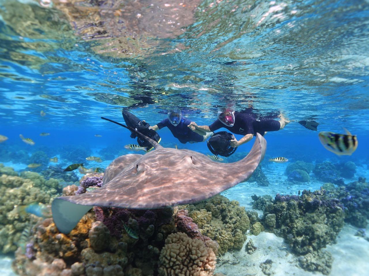 https://tahititourisme.mx/wp-content/uploads/2020/09/Sea-Scooter-Snorkeling-Tour-à-moorea-copie-2.jpg