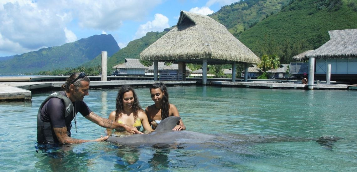 https://tahititourisme.mx/wp-content/uploads/2021/01/Offre_Moorea-Dolphin-Center.jpg